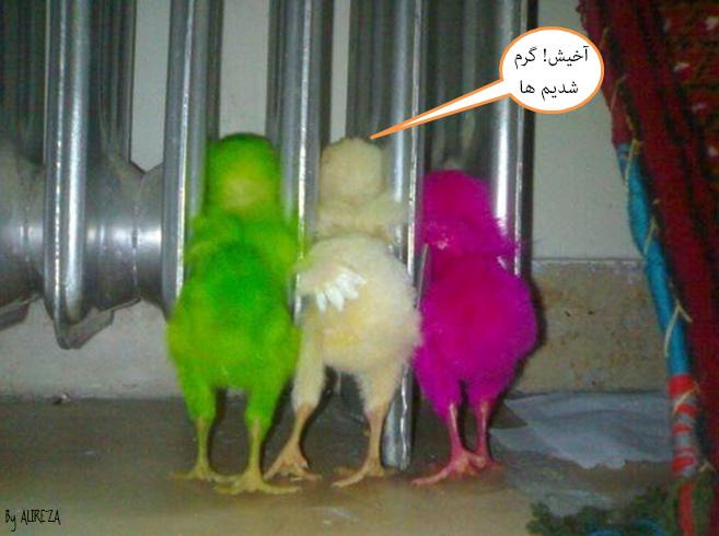 http://azerila.persiangig.com/image/fotochap/2.jpg