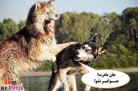 http://azerila.persiangig.com/image/fotochap/F_4/F-4%20%282%29.jpg