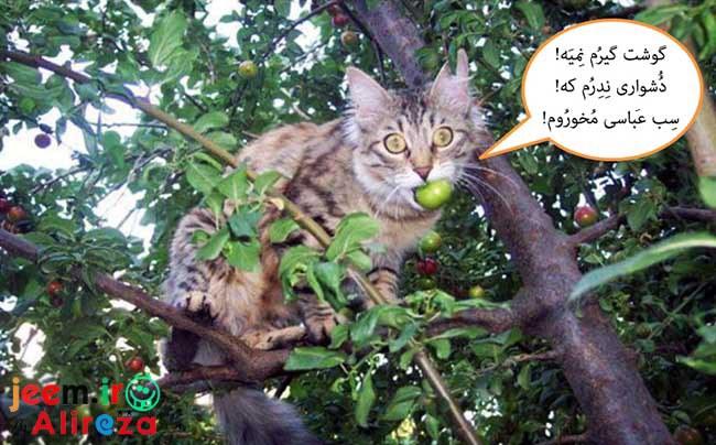 http://azerila.persiangig.com/image/fotochap/f-5/1%20%281%29.jpg
