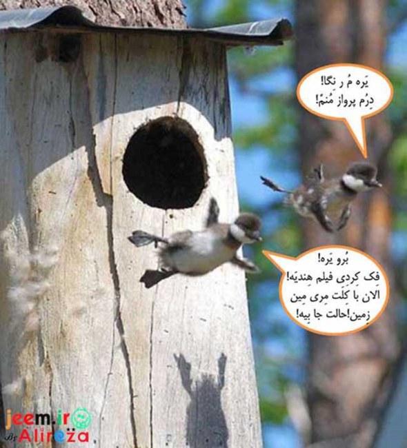 http://azerila.persiangig.com/image/fotochap/f-5/1%20%283%29.jpg