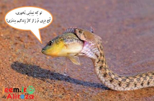 http://azerila.persiangig.com/image/fotochap/f-5/1%20%287%29.jpg