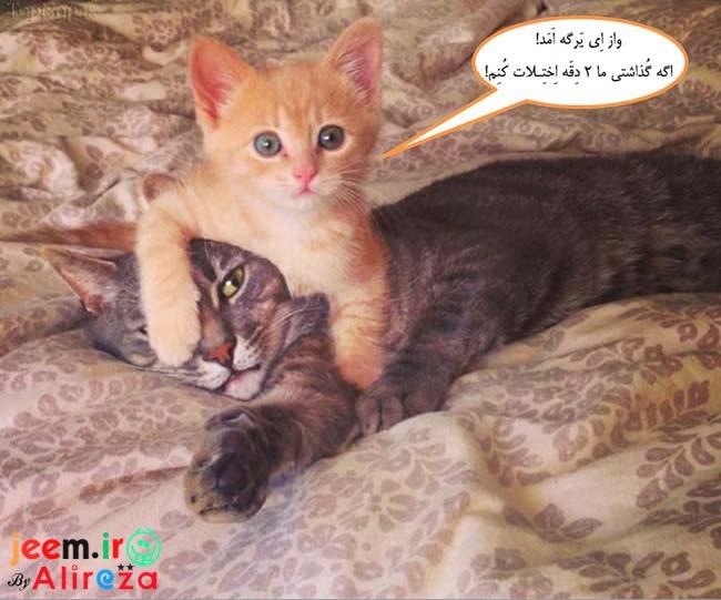 http://azerila.persiangig.com/image/fotochap/f-5/1%20%288%29.jpg