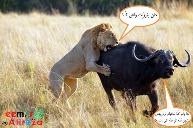 http://azerila.persiangig.com/image/fotochap/f-5/1%20%289%29.jpg