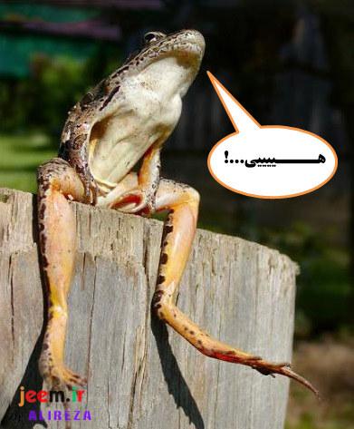 http://azerila.persiangig.com/image/fotochap/f3/12.jpg