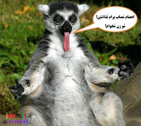 http://azerila.persiangig.com/image/fotochap/f3/13.jpg