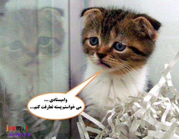 http://azerila.persiangig.com/image/fotochap/f3/6.jpg