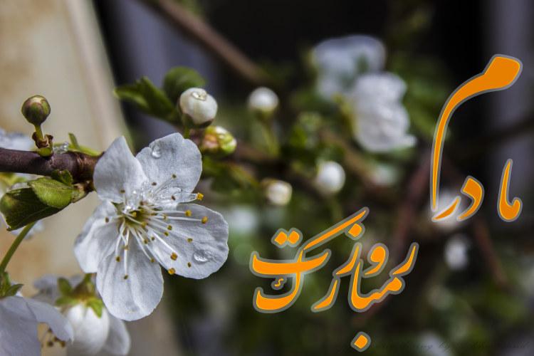 http://azerila.persiangig.com/image/jeem.ir/Madar/IMG_1485 copy3.jpg