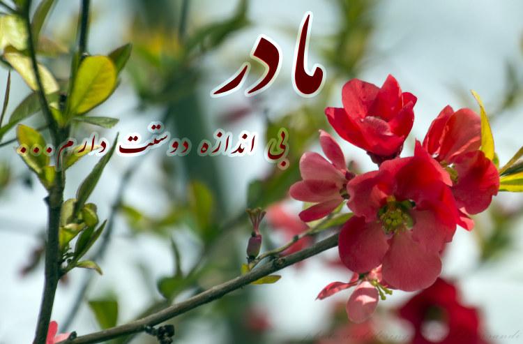 http://azerila.persiangig.com/image/jeem.ir/Madar/IMG_2658 copy3.jpg
