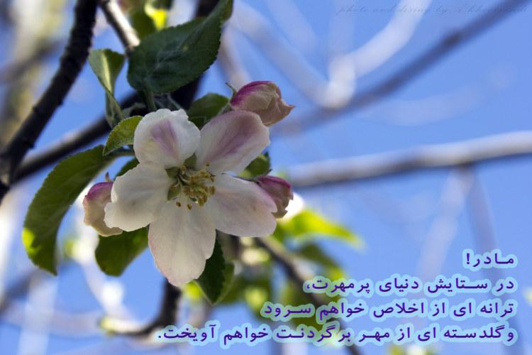 http://azerila.persiangig.com/image/jeem.ir/Madar/IMG_2714 copy3.jpg